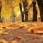 Prepárate para el otoño 2017 | Entorno Geek