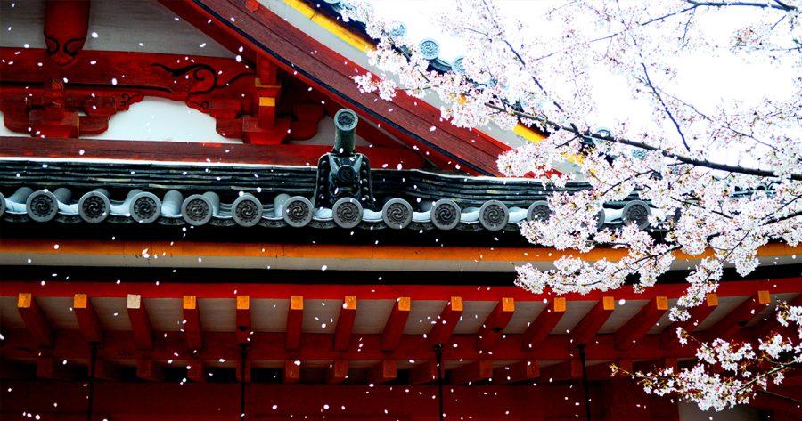 Hoy se celebra el Hanami, día de los cerezos en flor
